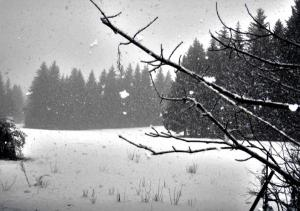 DCC ARISTOCRATICA PUREZZA nevicata ad Altipiani